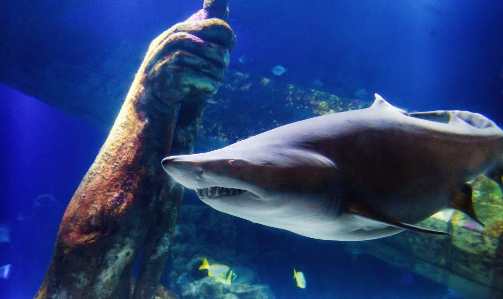Atlantis Banquets and Events-Long Island Aquarium Wedding Riverhead